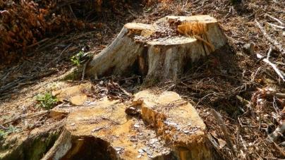 Dosare penale și amenzi de peste 30.000 de lei, plus lemn confiscat