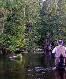 AJVPS Maramureș gestionează cele mai multe zone de pescuit recreativ din județ