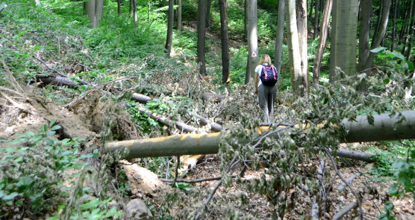 Trasee turistice blocate de copacii doborâți de furtuna de anul trecut