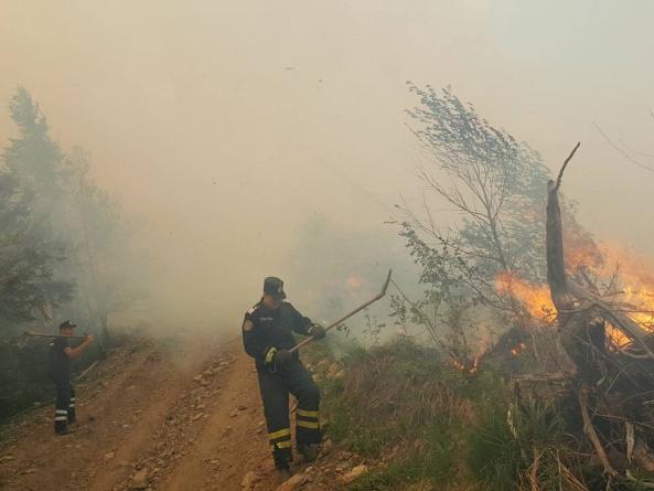 Au ars două hectare de vegetație