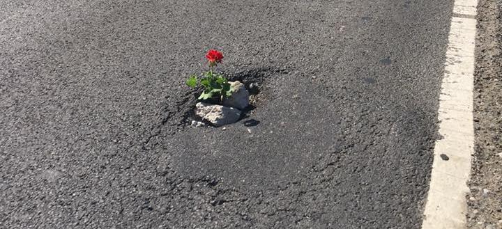 O  groapă, o floare… (VIDEO)
