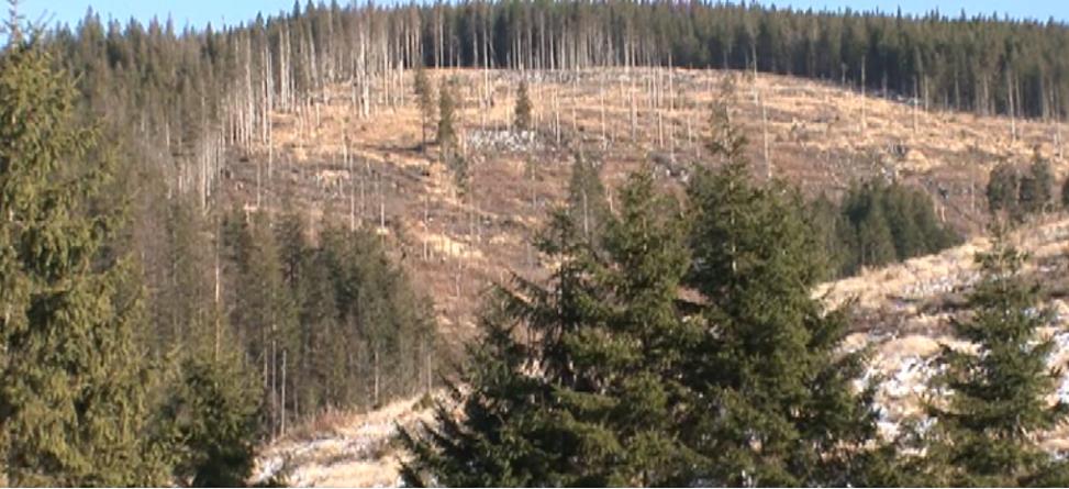 Documente incendiare privind pădurile Borșei. Acestea sunt căutate cu executorul judecătoresc