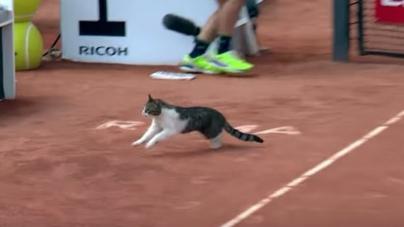 Și pisicile se bagă la tenis (VIDEO)