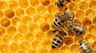 Conflict între apicultori și agricultori