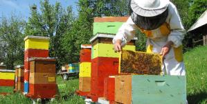 Doar în 1 august apicultorii maramureșeni mai pot depune cereri pentru subvenții