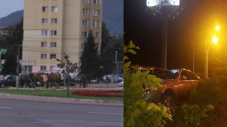 Cailor, cailor, fără zăbale (VIDEO)