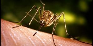 Atenție la țânțari! Există risc de infecție cu virusul West Nile