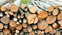 Captură de la o singură societate comercială: 6300 de lei – valoarea lemnului confiscat și 6000 de lei – amenzile