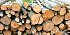 Peste 100 de acțiuni ale polițiștilor pentru protejarea fondului forestier