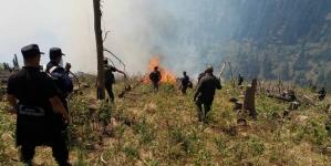 Zeci de hectare de vegetație uscată au ars în ultimele zile