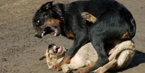 Deținătorii de câinii periculoși intră în vizorul poliției