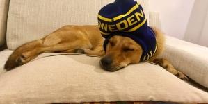 Iubiți și câinii vagabonzi – o lecție relaxată oferită de Ambasada Suediei la București