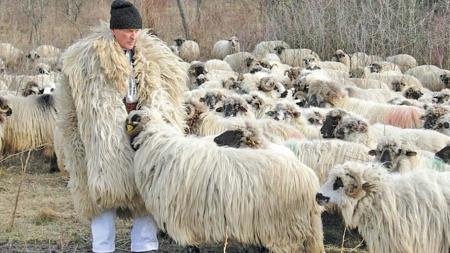 Extreme de Maramureș: 66 de fermieri nonagenari și doar 48 sub 20 de ani