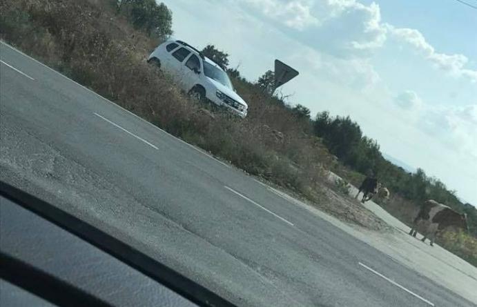 De radare nu scapă nici vacile, chiar dacă nu se plimbă cu viteză excesivă
