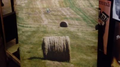 Cooperativele revin la modă în agricultură