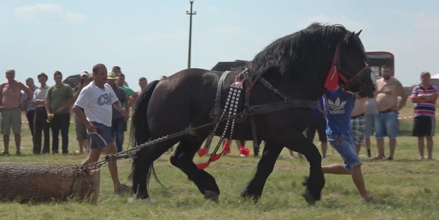 """Dau năvală caii la """"Castane 2018"""""""