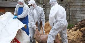 Focar de pestă porcină africană și în Șieu