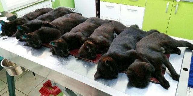 Trei zile de sterilizări gratuite pentru câini și pisici, în trei localități diferite