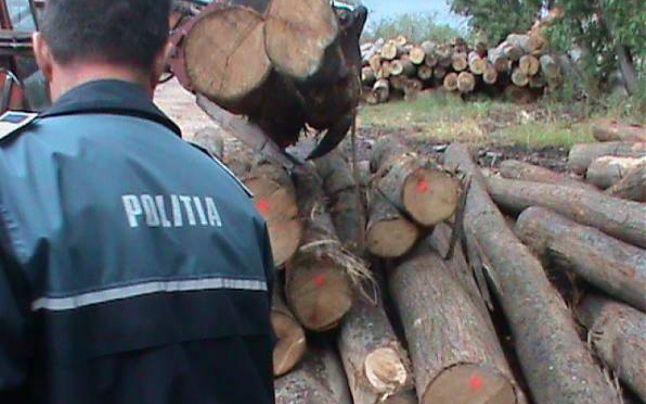 Cinci persoane reținute pentru infracțiuni silvice (VIDEO)
