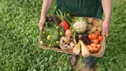 Cum stăm cu agricultura ecologică în Maramureş