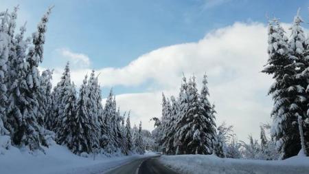 Zi mai molcomă și ca frig și ca ninsori
