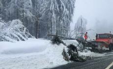 Un copac s-a prăbușit sub greutatea zăpezii, pe carosabilul DN 18, în Pasul Gutâi
