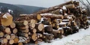 Material lemnos confiscat de polițiști de la o firmă din Borșa