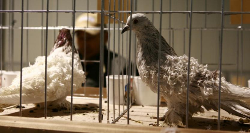 Expoziție de păsări și animale mici