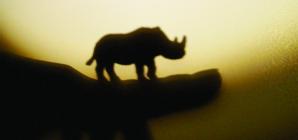 """""""Rinocerii"""" la Municipalul băimărean"""