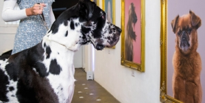 Galerie de artă pentru câini