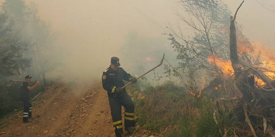 Sute de hectare de vegetație căzute pradă focului