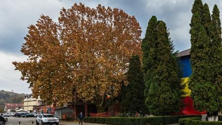 """Un platan din România, în concursul """"Arborele european al anului 2019"""". Votați-l! (GALERIE FOTO)"""