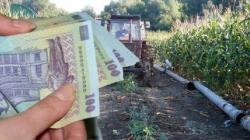 APIA – cum mai e cu plățile pentru fermieri