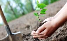 """Continuă campania """"Fă-ți datoria de om… plantează un pom!"""""""