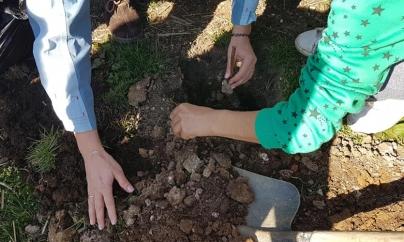 Trandafiri plantați la Muzeul Satului de copii de la case de tip familial (GALERIE FOTO)