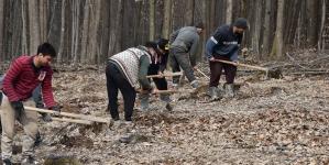 Plantare de puieți în pădurea din Fărcașa