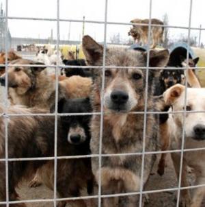 Subiectul câinilor fără stăpân – în continuare unul sensibil în Maramureș