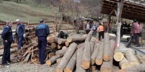 15.500 lei a fost valoarea amenzilor și lemnelor confiscate, după controale în domeniul silvic