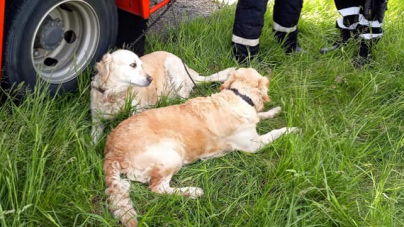 Un băimărean şi câinii săi, descarceraţi după accident; şoferul era rănit, câinii teferi s-au împrietenit cu salvatorii (GALERIE FOTO)