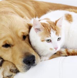 Sterilizări gratuite pentru câini și pisici