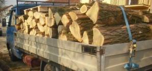Învățătură de minte: când transporți ilegal lemne, măcar permisul de conducere să fie în regulă