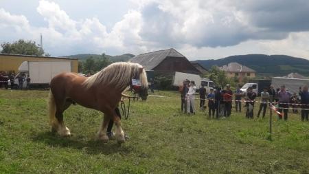 Poveşti cu iubitori de cai din Maramureș (GALERIE FOTO)