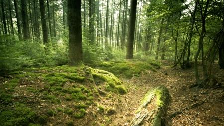 Proiect de protejare a pădurilor