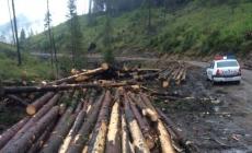 Material lemnos confiscat în Botiza şi Suciu de Sus