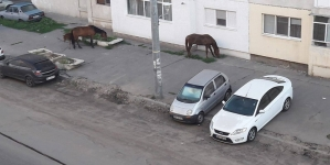 Cailor fără de șei, dați-vă prinși, nu fiți mișei!