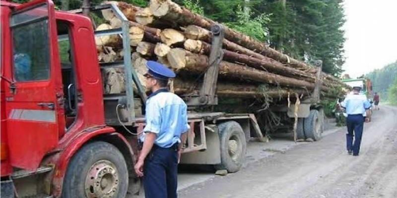 Amendă de 10.000 de lei pentru transport de lemn fără documente