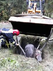 Amplă mobilizare pentru salvarea unui cal căzut într-un bazin betonat