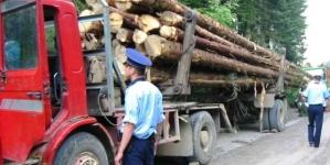 Transporta lemne ilegal