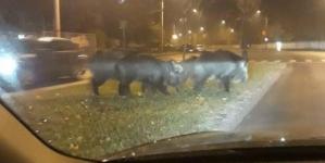 S-a întâmplat în vecini: noaptea au asaltat fără jenă un inspectorat de poliție