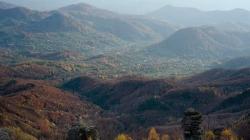 11.000 de puieți vor fi plantați în zona orașului Baia Sprie